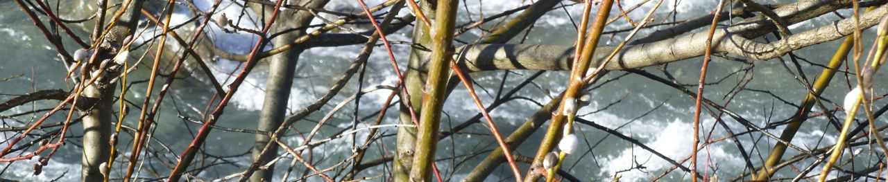 Winter twigs by river