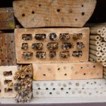 This wonderful nest site for solitary bees can be found at the Zurich Botanic Garden